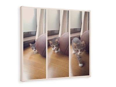 ネコ キャンバス ギフト